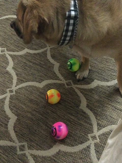pup playing with balls