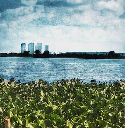 East Calcutta wetlands. Shot with a mobile phone camera.