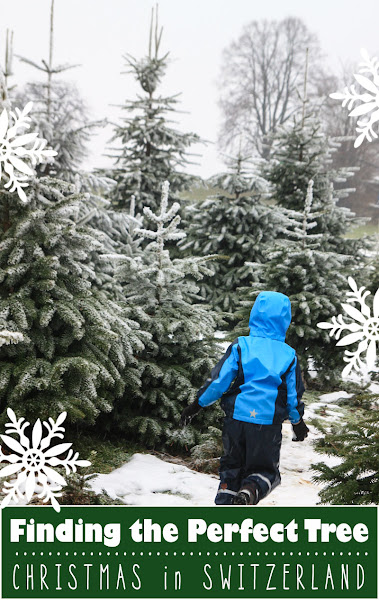 Find your perfect Christmas tree in Zurich Switzerland, maybe even cut your own tree down in the city forests.