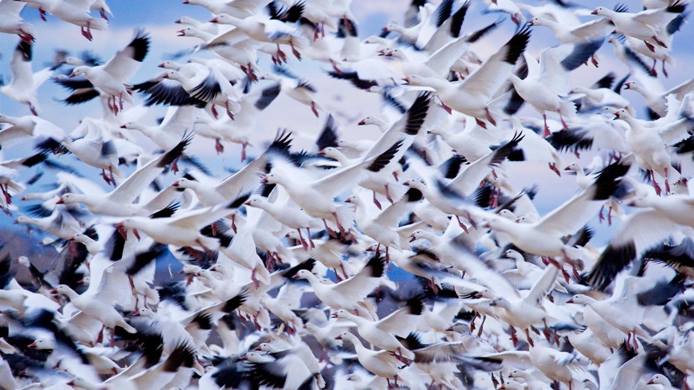 Bird Wallpapers