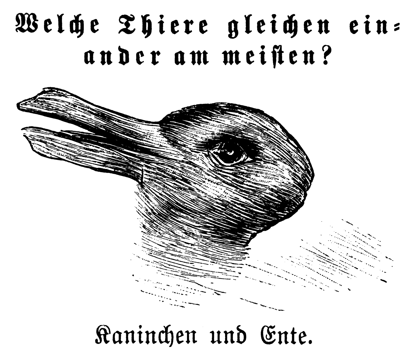 Salvēte!: Duck or rabbit?