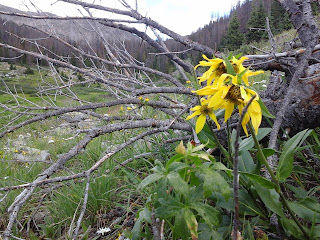 A yellow wildflower in the forest on a cloudy day.