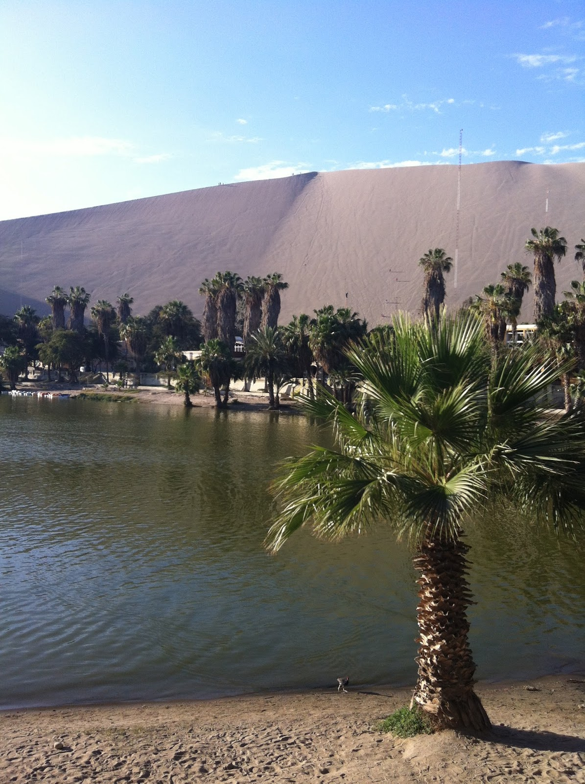 Oasis in Huacachina