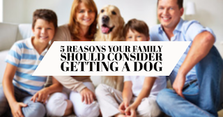 Reasons Your Family Should Consider Getting a Dog
