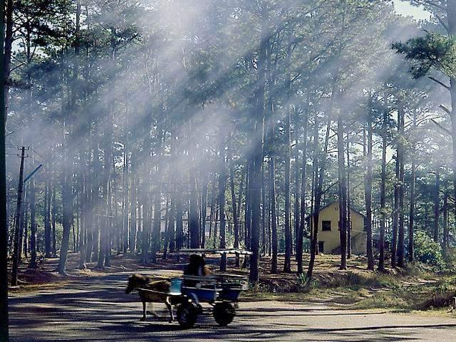 Hình ảnh du lịch đà lạt vào mùa khô thời tiết nắng ấm áp