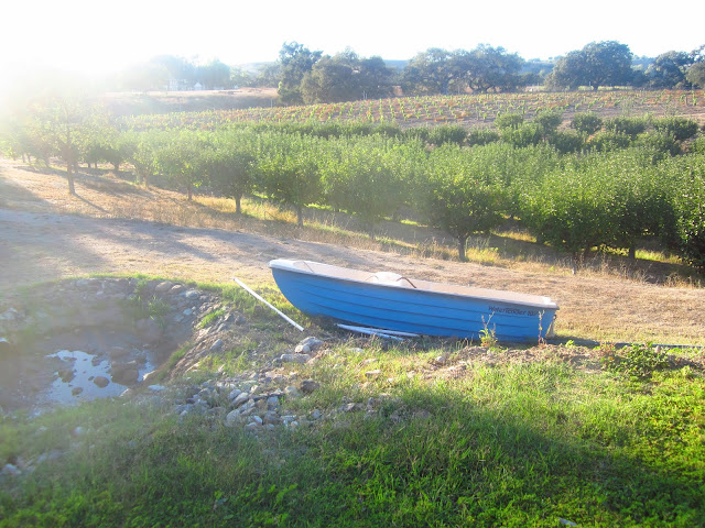 blue boat in front of rows of grape vines at the Beckmen Vineyards