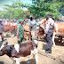 TNI-Polri Kembali Tegakkan Kepatuhan Prokes Pasar Hewan
