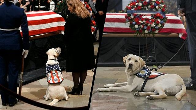 """قصة الكلب """"سولي"""" الذي شارك في جنازة الرئيس جورج بوش الاب العسكرية"""
