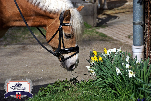 Pasture Management Tips All Horse Owners Need To Know