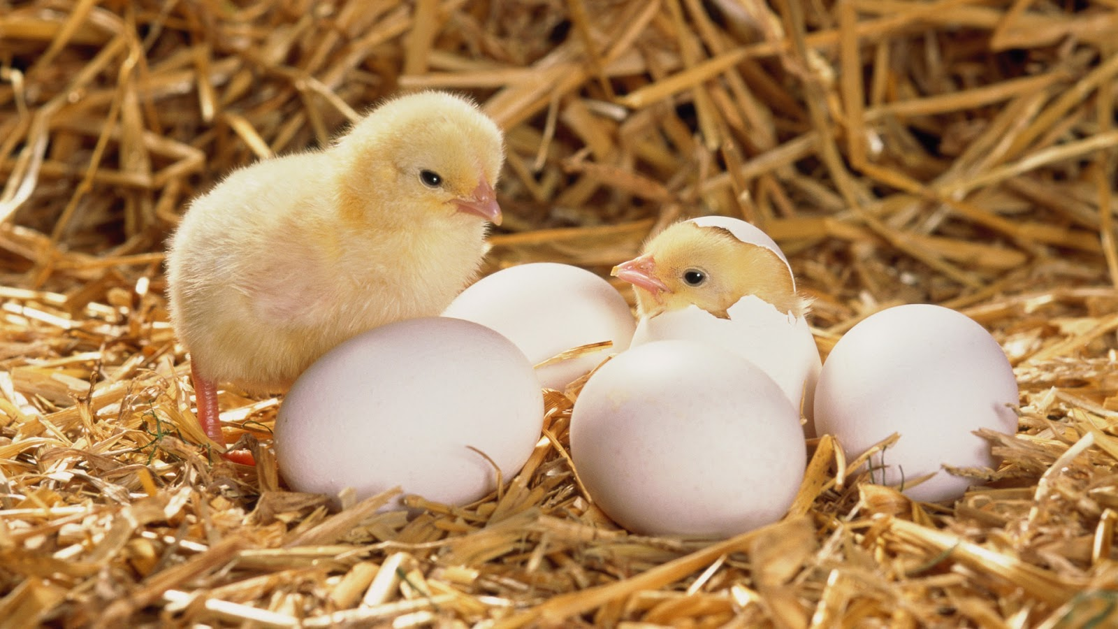 terrierman s daily dose egg technology saving money and lives