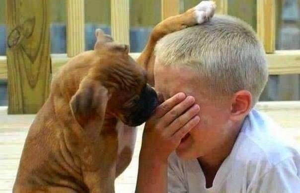 Cane che consola bambino
