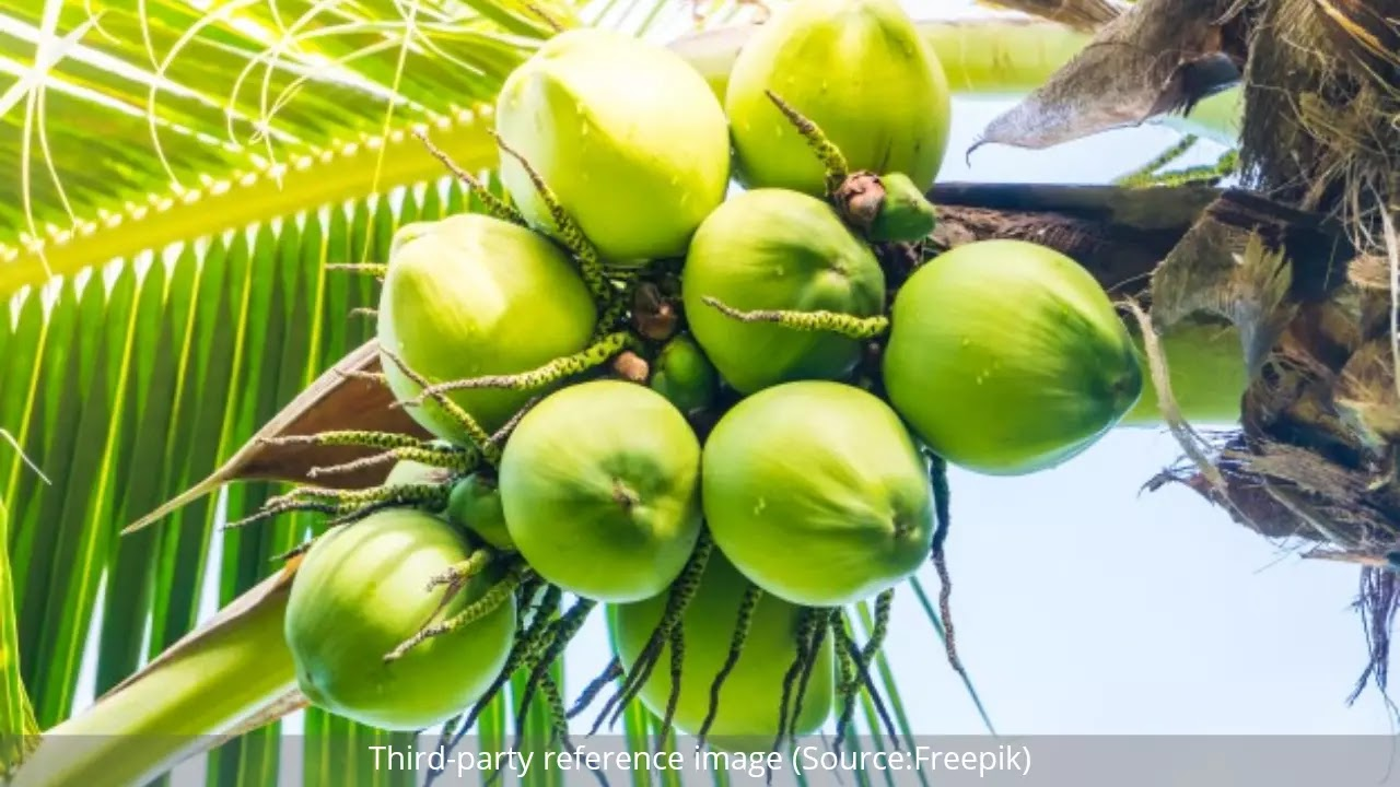 Benefits of Coconut Water | HealthInsta