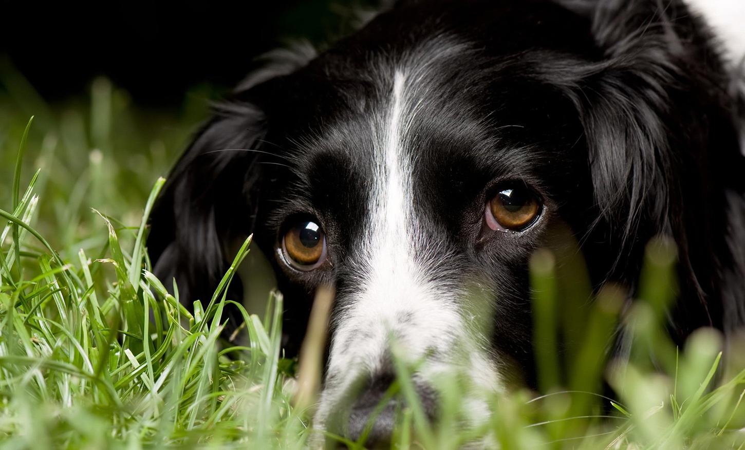 10 Common Homeopathic Remedies for Dogs | Australian Dog Lover