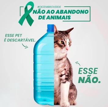 POLÍTICA REGIONAL - Anderson Correia ressalta preocupação sobre abandono e maus-tratos de animais durante os meses de janeiro e dezembro