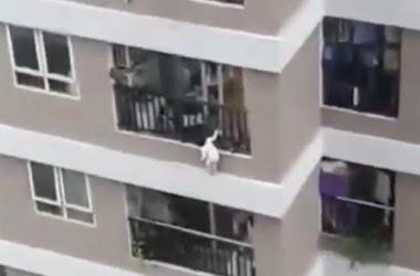 Criança cai de 12º andar e é salva por motorista no Vietnã