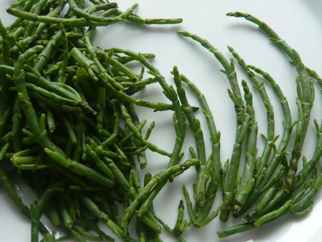 Salicornia E.-Europäischer Queller po prostu soliród - Czytaj więcej »