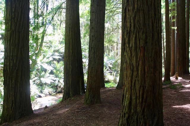 forest floor of pine needles