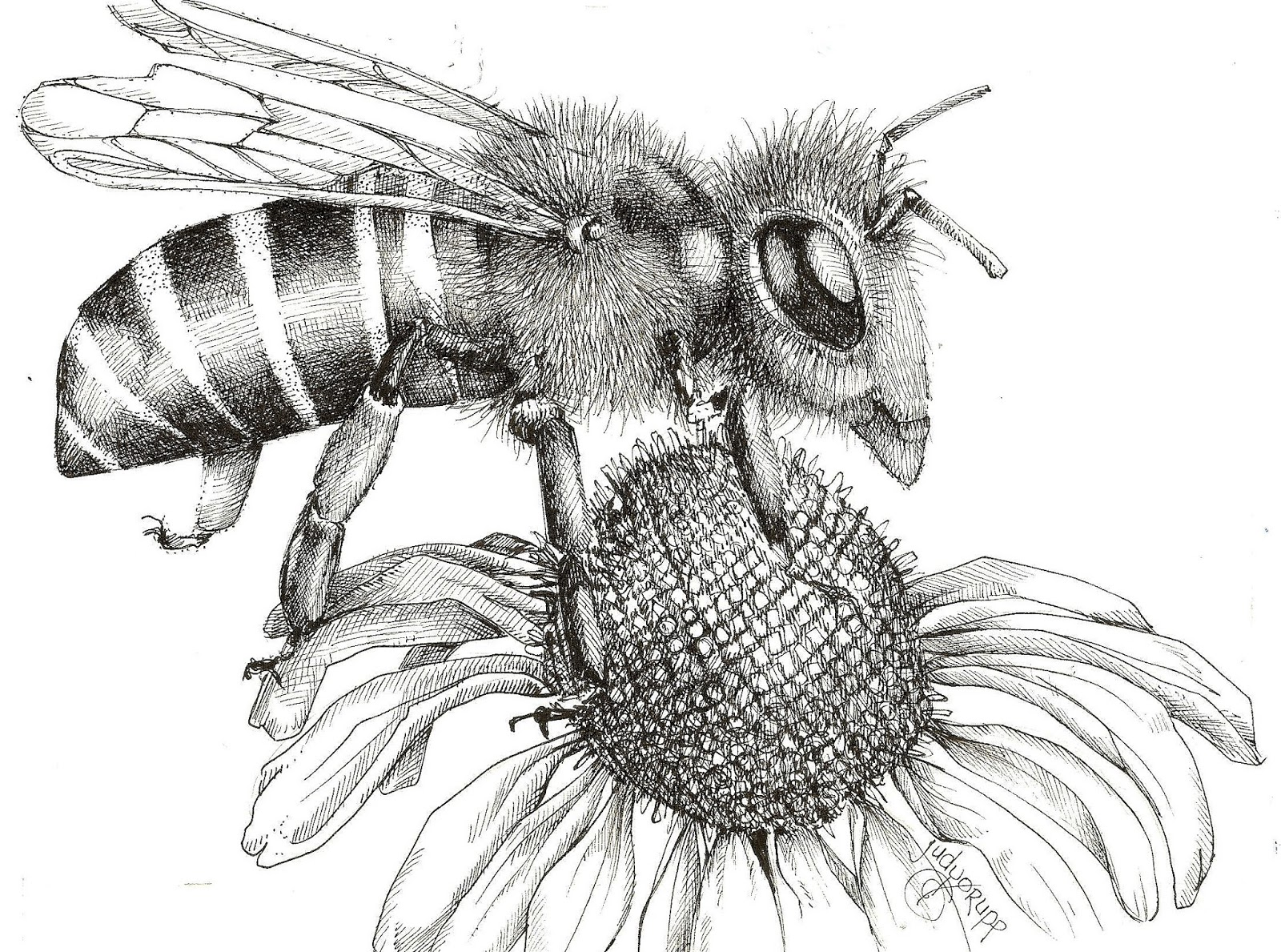 Bees In Black And White