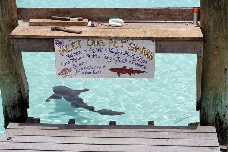The Cellar Door - Photography: Swimming with Sharks
