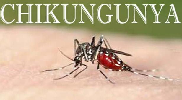 Chikungunya,चिकिनगुनिया के घरेलू इलाज