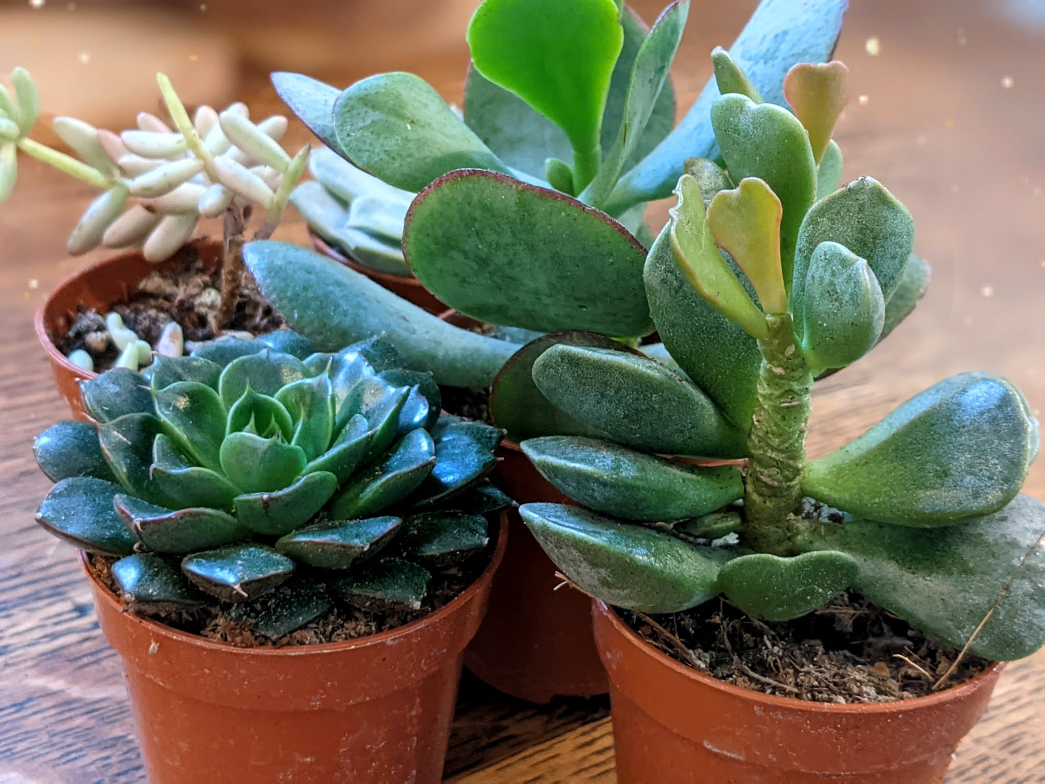 doodleheart.co.uk  #PlantParenting succulents