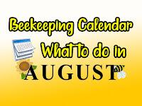 Beekeeping calendar august
