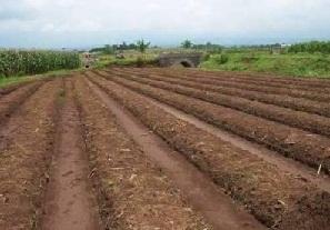 Tujuan Pengolahan Tanah Dan Keuntungannya
