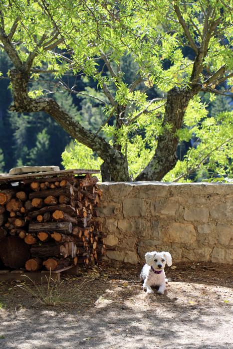 Hund in Brantes