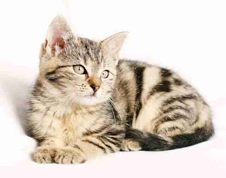 Cat names starting with A