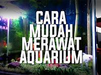 Cara Sederhana Dan Mudah Merawat Aquarium Ikan Hias