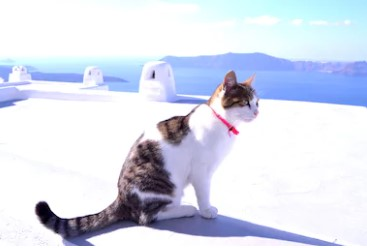 Aegean Cat - all you want to know about Aegean Cats