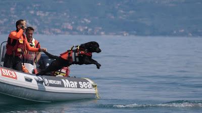 Supercaes_com_Trabalhos_Extraordinarios_cao_faz_resgate_aquatico_no_lago_Garda_na_Italia_Credito_Divulgacao_TV_Brasil