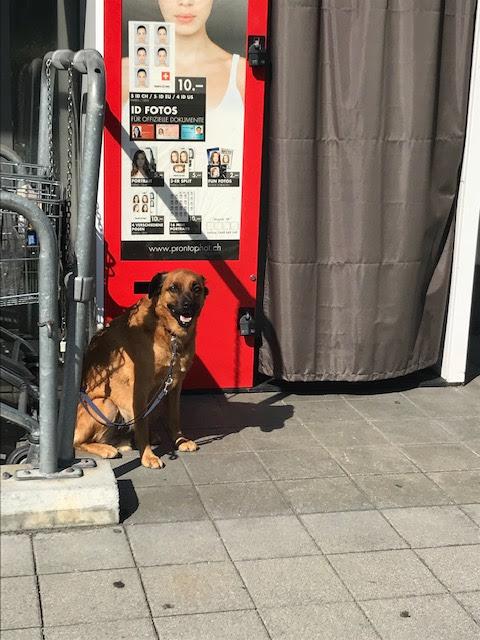 スイス・フルーティゲンの町にある生協COOP前にいた犬