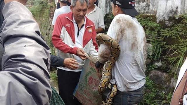 penemuan ular