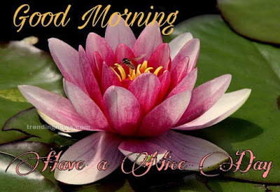 good morning pic hd,Download good morning whatsapp images free