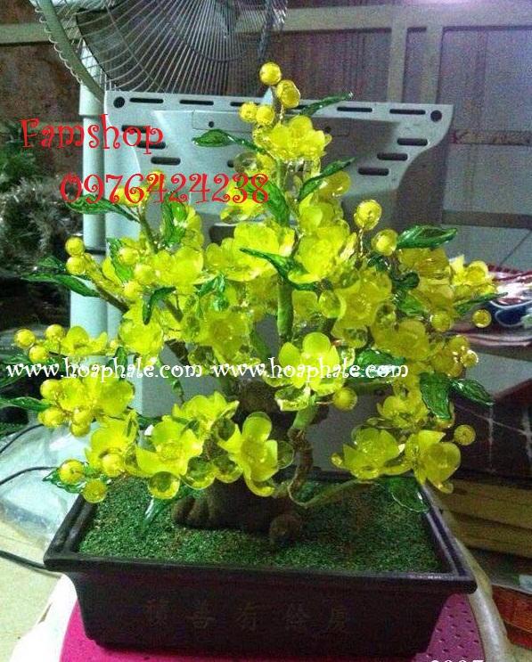 Goc bonsai cay hoa mai tai Hoang Ngan