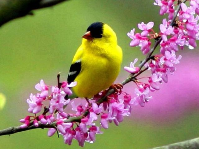 Pictures Of Pretty Birds And Flowers