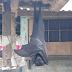 Larawan ng isang Paniki na kasinglaki ng Tao, Kumakalat sa Social Media