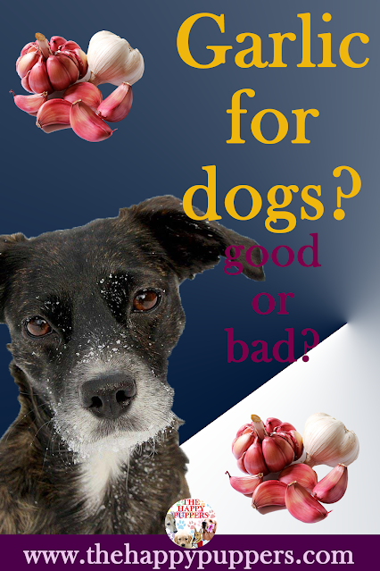 Garlic in dogs: what's the real truth?