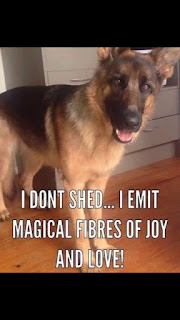 Dog Humor : I Dont Shed