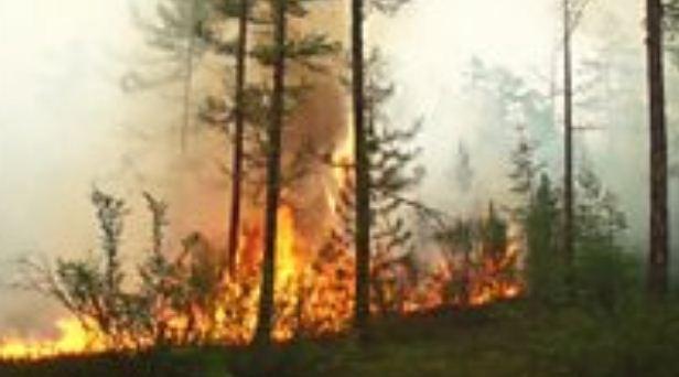 الغابات في القطب الشمالي الشمالية تحترق لبضع أسابيع.