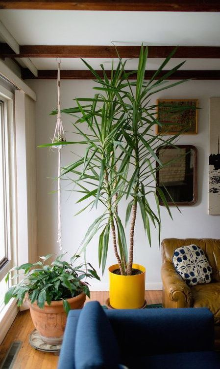 A Beginner's Guide to Houseplants