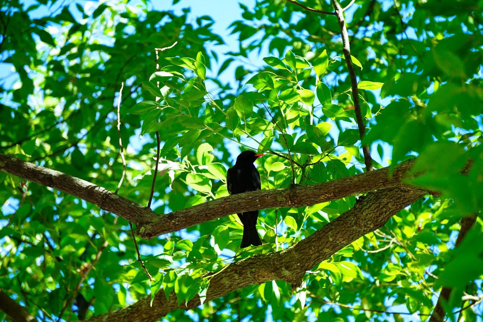beautyanxiety.com-beautyanxiety.com-cultural-park-forest-DSC08746.jpg