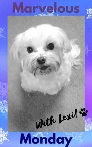 Marvelous Monday, Lexi, Lexi the Maltese, On My Kindle Book Reviews