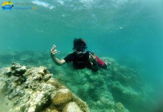 snorkeling murah di karimunjawa