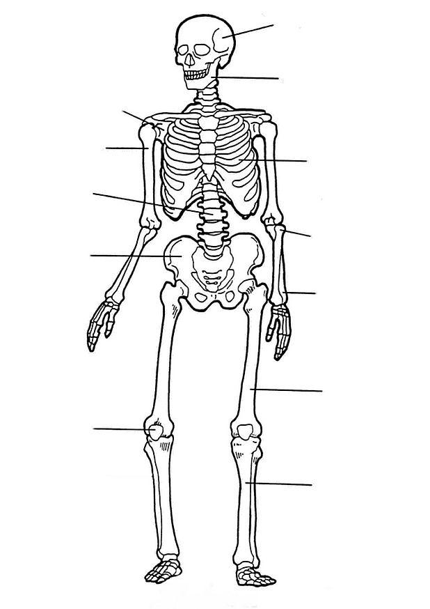 Cantinho do Primeiro Ciclo: Esqueleto para completar com