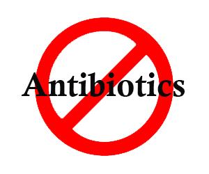 Cần sớm loại bỏ kháng sinh trong thức ăn chăn nuôi. Ảnh minh họa