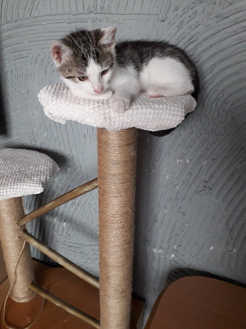 Kot domowy siedzi na drapaku diy