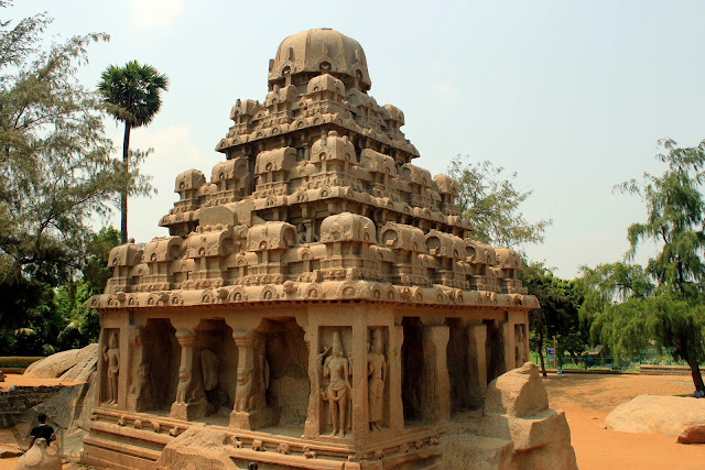 The tallest and largest of the Five Rathas, Dharmaraja Ratha with an height of 11 m and its square base measuring 8.5 m