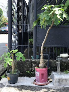 Urban gardening that we can actually benefit from